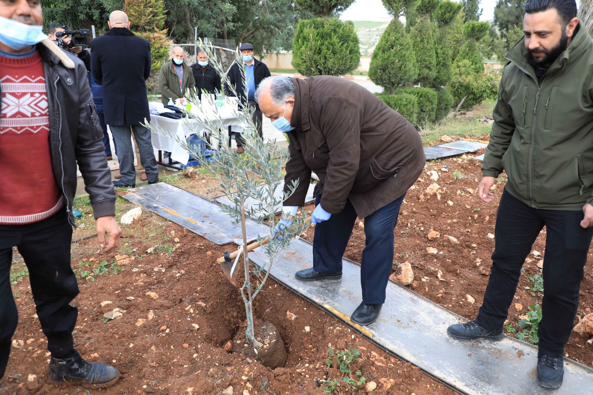 جانب من زراعة اشجار الزيتون في الجامعة بمناسبة يوم الشجرة العالمي